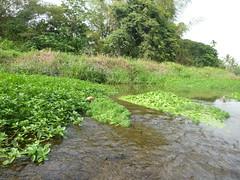 五溝村湧泉匯流區水草豐美,縣府卻以防洪為由整治。朱玉璽攝。