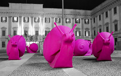 Milanese pink snails (Scott Mundy) Tags: pink italy milan digital nikon italia milano dslr snails lombardia selectivecolor hotpink lombardy selectivecolour d80 fusciapink crackingartgroup