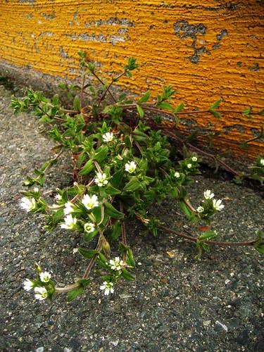 Asphalt Flowers