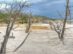 Yellowstone - Mammoth Hot Springs (*Checco*) Tags: park wood travel wild summer sky panorama orange usa cloud mountains hot tree tourism nature colors rock fog america spectacular landscape dead flow outdoors death lava niceshot united unitedstatesofamerica hill terraces scenic dramatic nobody calcium basin erosion national caldera mammoth springs limestone mineral yellowstonenationalpark destination colored yellowstone flowing states wyoming geology wilderness geyser sulfur travertine dramaticsky minerva geothermal lunar landforms hdr steaming dda eroded mammothhotsprings carbonate geological cooled wildernessarea oltusfotos dragondaggerphoto
