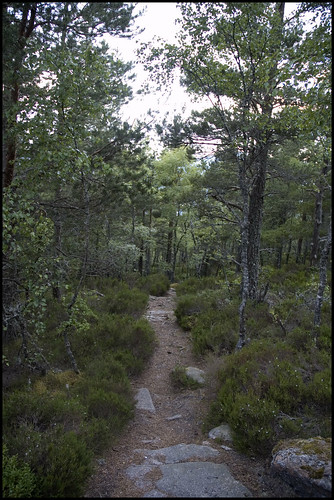 Craigendarroch Slopes II