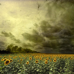 summer glory (old&timer) Tags: idream naturepoetry colorphotoaward absolutegoldenmasterpiece asquaresuperstarstemple