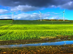 Three Wind Turbines (Gordon M Robertson) Tags: uk reflection clouds puddle scotland aberdeenshire wind fields turbine rapeseed windturbines greenenergy threewindturbines skyaberdeen