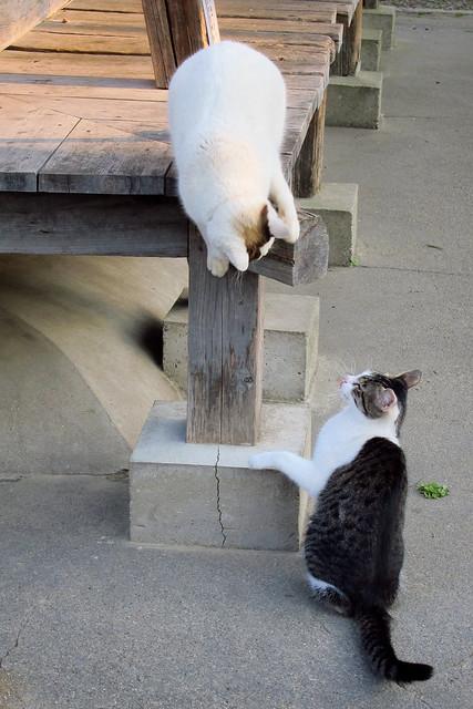 Today's Cat@2012-04-09