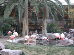 DSCN1273 (jblueafterglow) Tags: usa animals lasvegas nevada flamingos 2011 flamingohotelandcasino lasvegasnevadausa june2011