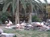 DSCN1273 (jblueafterglow) Tags: usa animals lasvegas nevada flamingos 2011 flamingohotelandcasino lasvegasnevadausa june2011