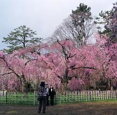 94700010 (Darjeeling_Days) Tags: hasselblad 京都 中判 プロビア