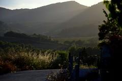 Capvespre a Santa Maria de Foix. (Angela Llop) Tags: sunset landscape spain wine eu catalonia vineyards catalunya penedes viñas vinyes torrellesdefoix enoturisme tourismuspenedès