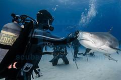 2014 03 TIGER BEACH-2889