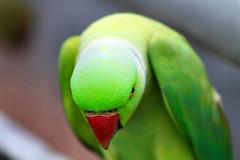 Melaka Bird Park (Phalinn Ooi) Tags: melaka bird park taman burung malaysia ayer keroh asia wildlife zoo nature wanderlust travel tour holiday cuti relax chill family outdoor dslr 7d eos sigma zoom flora fauna photography explore