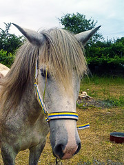 (Luis Diaz Devesa) Tags: españa horse caballo spain galicia vilagarciadearousa villagarciadearosa estremità mygearandme mygearandmepremium