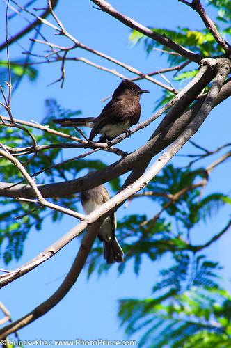 Birds-5980