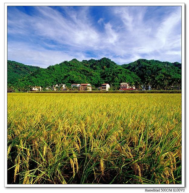 美濃˙美稻-2