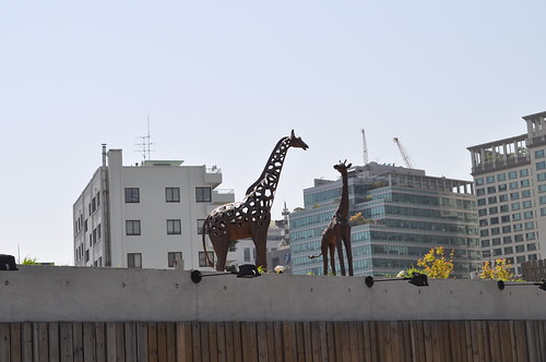 Giraffes at Ssamzie