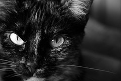 Cat eyes (Aztlek) Tags: blackandwhite bw eye blancoynegro cat ojo nikon bokeh gato nikkor mirada bastet ufraw 18200mm bokehlious