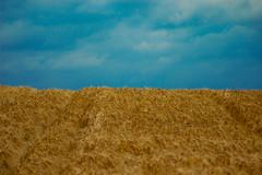 Himmel und Feld (Philipp Himmelmann) Tags: sky tree natur feld wiese himmel philipp bume baum alle weizen himmelmann