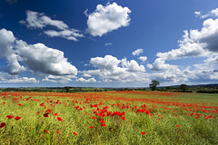 Poppy View (Chris Lishman) Tags: uk red summer sky nature field clouds canon newcastle landscape farming northumberland lee poppy poppies crops summertime agriculture filters polarizer papaver redandgreen ovington poppyfield lishman fieldofpoppies wildpoppies leefilters chrislishman welcomeuk naturalpoppies