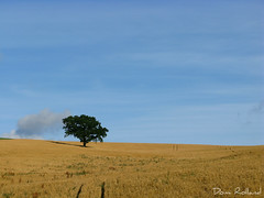 J' irai ... (Domi Rolland ) Tags: france nature europe bleu ciel nuage arbre millau bl midipyrnes saariysqualitypictures