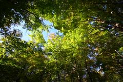 Green Roof (Oscar von Bonsdorff) Tags: statepark blue trees sky usa tree beautiful up canon studio nice interesting unitedstates connecticut ct boom treetops rbol pro northamerica fabulous simsbury  albero puu baum trd photographing  xsi bloomfield greentones aa canonefs1022mmf3545usm  georgeous canon1022 naturecolors  verygreen greencolors heubleintower canonefs1022 canon1022usm 450d canonefs 1022usm canonef1855 talcottmountain talcottmountainstatepark 10223545 metacomettrail oscarvonbonsdorff thetowertrail gilbertheublein heubleinincsmithandbassette