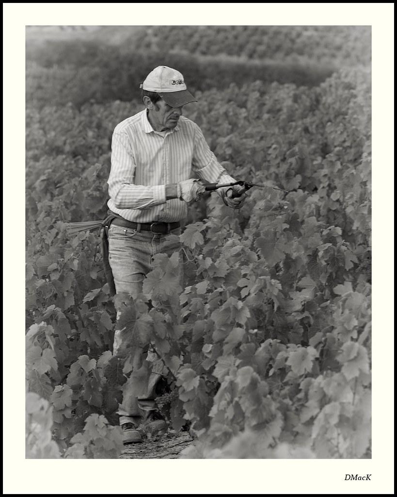 Andre Collonge, Viticulturalist, Beaujolais