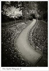 Take the Path (Artvet) Tags:
