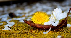 Sail away with me (A.R.H.) Tags: white flower yellow boat leaf spring ride sail romantic gondola boatride bigmomma gamewinner challengeyouwinner mygearandme mygearandmepremium pregamewinner
