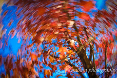 Autumn Foliage,Mount Wilson (mukunkanap) Tags: road street blue autumn panorama house mountain holiday toronto ontario canada mountains color colour tree fall wet rain fog corner canon fence garden season gate track mt bright fallcolors pano cottage autumncolors mount trail hedge wilson aussie canopy soe colorsoffall 500d colorsofautumn supershot mywinners abigfave fallintoronto anawesomeshot frhwofavs wardenwoodpark