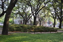 Savannah Photo