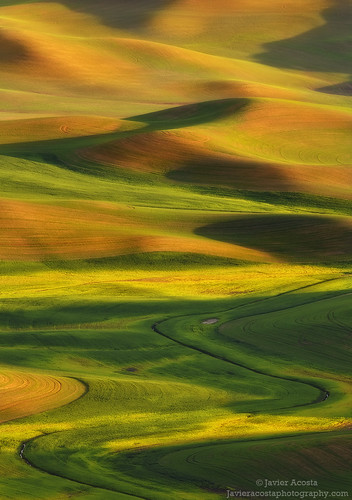 Shadow Play - Palouse Hills, WA