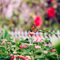 Butterfly & Fence (Mara T Pons) Tags: flower colors fence butterfly mariposas fencefriday verano2012