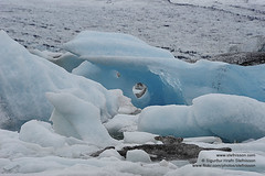 The Glacial lagoon shs_n3_014157 (Stefnisson) Tags: ice iceland glacier iceberg gletscher glaciar sland icebergs jokulsarlon breen jkulsrln ghiacciaio vatnajkull jkull s gletsjer ln  glacir sjaki sjakar stefnisson