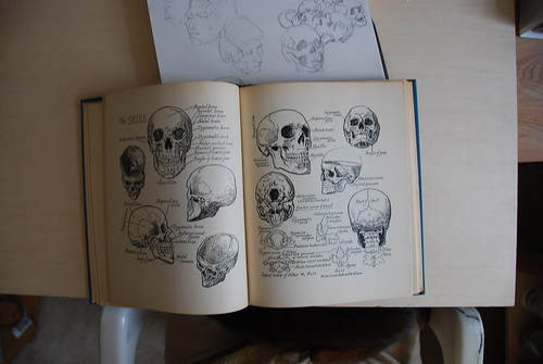 Anatomy book - focus on skull