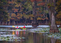 Caddo Lake Fall (Caren Mack Photography) Tags: park lake tree fall canon moss flickr texas lily state pad swamp cypress mack caddo caren uncertain cypresstree caddolake easttexas texasstatepark 50d uncertaintexas canon50d carensphototrip carenmack texaspineywoods
