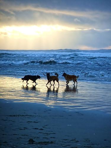 3 dog beach