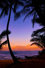 "Silhouetted palm trees - tropical beach sunset - Maui (IronRodArt - Royce Bair (""Star Shooter"")) Tags: ocean travel sunset sea vacation sky orange holiday seascape tree tourism beach nature water beautiful silhouette night sunrise landscape outdoors island dawn hawaii evening coast colorful paradise surf view dusk getaway background horizon scenic peaceful maui lagoon palm resort exotic shore tropical destination romantic tropic coastline recreation re"