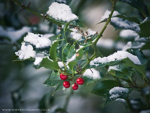 Snow - November 2010 UK