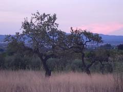 Catalan country. Catalogne, Espagne. (France-) Tags: 2 nature catalonia ciel deux crpuscule campagne espagne arbre coucherdesoleil catalogne worldtrekker