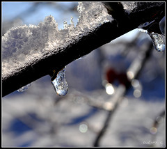 Icicle (Audry G.) Tags: winter icicle neige blanc feuille winterscape