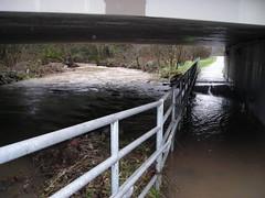Johnson Creek runneth over