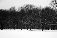 (...storrao...) Tags: trees blackandwhite bw snow man berlin germany garden deutschland nikon running pb mitte pretoebranco tiergarten d90 storrao sofiatorro nikond90bw
