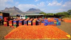 Tomatoes Galore 7 (Michael Foley Photography) Tags: india season farmers market tomatoes maharashtra wholesale nasik