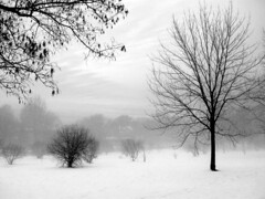 Snow and Fog 4 (theothermonalisa slowed down with the new) Tags: trees winter sky snow fog clouds cobbshill platinumpeaceaward