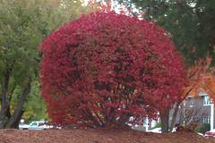 Fall in CT (oana-) Tags: autumn fall d50 50mm mba us connecticut oana