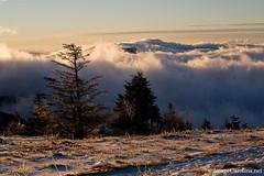 Fog Backdrop (Daniel Burleson) Tags: winter mountain snow ice sunrise nc highlands tn jane north bald ridge trail round carolina appalachian roan grassy at