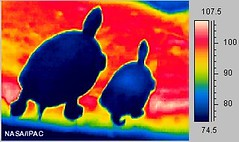 Turtles in infrared light