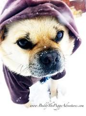 winter snow cutedogs dogclothing ecopup ecofans