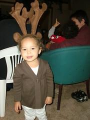 Reindeer Aubrey