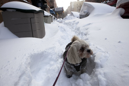 Dog walking, the morning after New York's big blizzard