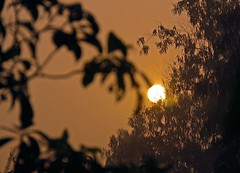 Sun Rise at Heritage [ দেওয়ান বাড়ীর সূয্যদদোয়-1 ] (HamimCHOWDHURY  [Active 01 Feb 2016 ]) Tags: life light shadow red portrait blackandwhite sun white black green nature sunrise canon eos twilight colorful faces blu sony surreal excellent eucalyptus dhaka vaio rgb hobigonj bangladesh dlsr 60d rubbergarden rubbercultivation 595036 framebangladesh rubberplan digombor dawanbari marufdeawan saguntig