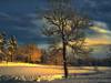 "Winter afternoon. (Bessula) Tags: winter light sky snow tree nature ngc greatphotographers worldbest bessula theunforgettablepictures tatot saariysqualitypictures platinumpeaceaward bestcapturesaoi magicunicornverybest selectbestfavorites selectbestexcellence sbfmasterpiece elitegalleryaoi ""flickraward5"""